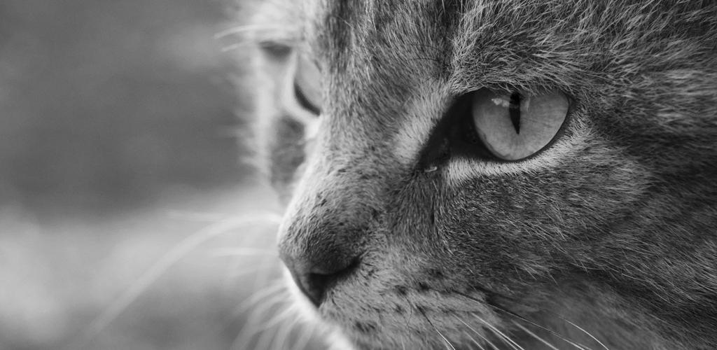 katt11