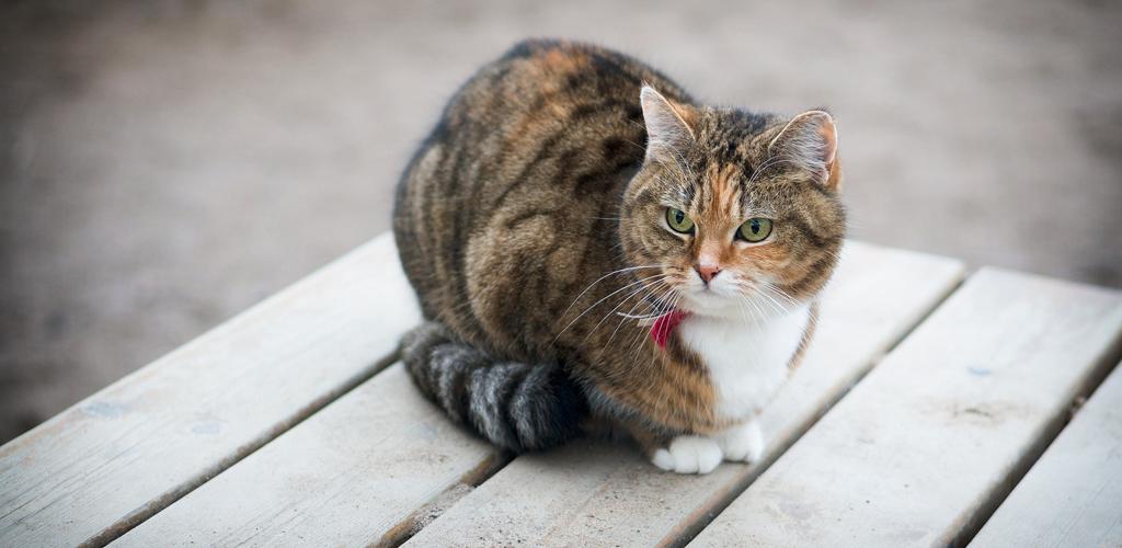 katt6